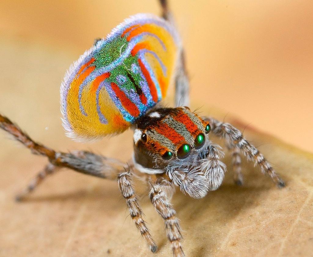 Dream of spider