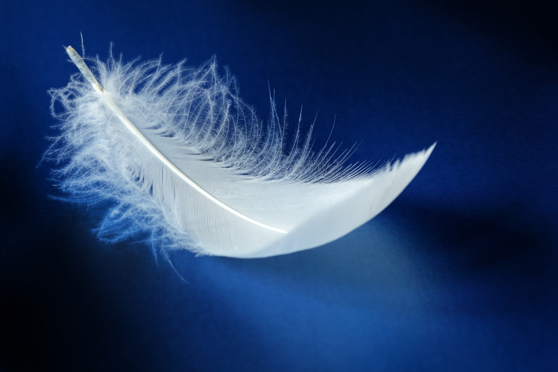 Dream of feather