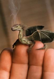 Bebe_dragon