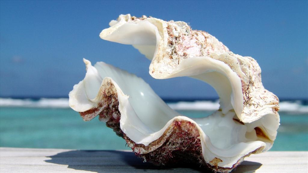 dreaming of seashell