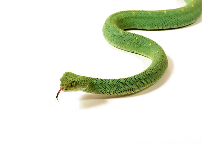 dreaming of snake